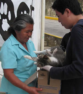 >Spay-Neuter Clinics