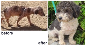 aaofus.org-before-after-mange2.fw